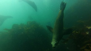 South Africa: Scuba Diving in Cape Town