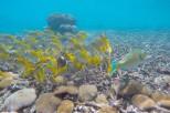 fish nang yaung