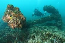 Diving - Salvador