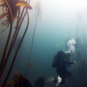 South Africa: Cape TownDiving