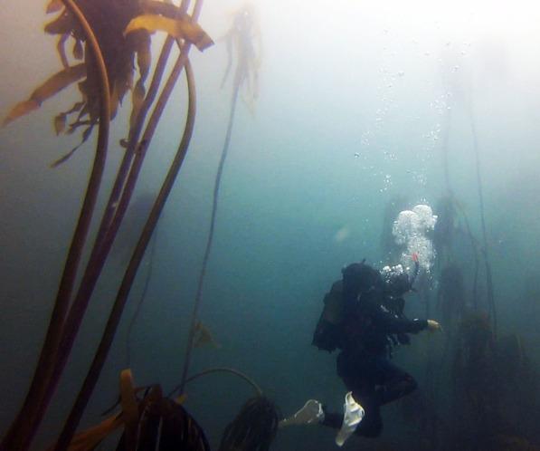 Steve kelp forest millers