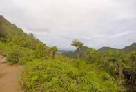 Tropical vegetation at altitude