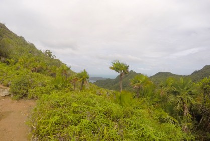 Tropical vegetation at altitude