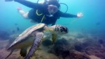Turtle at Ilha das Cabras